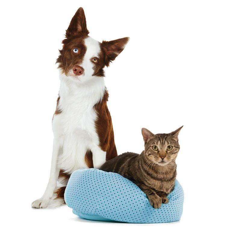 pet supplies accessories and
