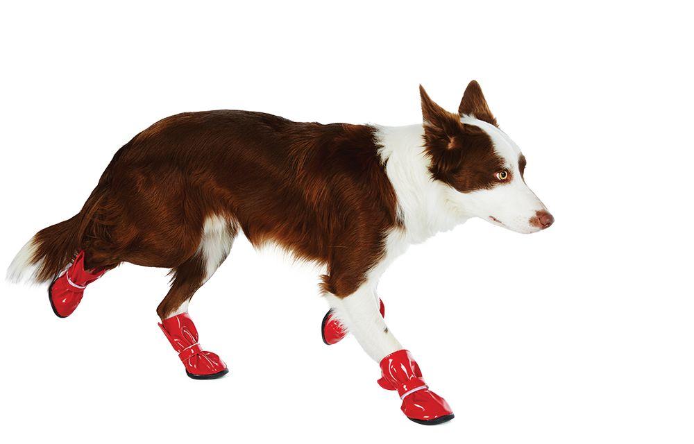 Dog Clothes, Shoes, & Apparel