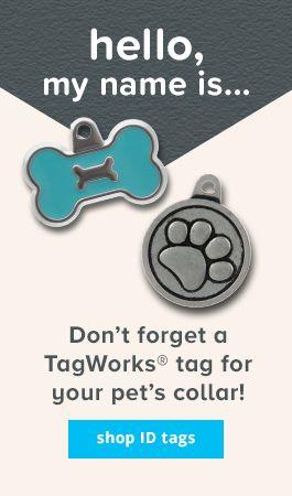 Petsmart Pet Tags : petsmart, Puppy, Collars:, Personalized, Collars, PetSmart
