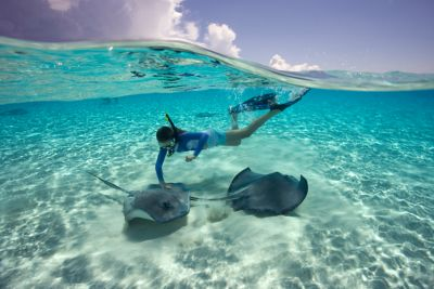 swimming with stingrays in