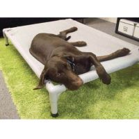 Buy Coolaroo Aluminum Frame Elevated Pet Bed - Small from ...