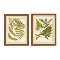 Framed Giclee Fern Print Wall Art - Bed Bath & Beyond