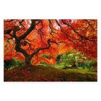 Buy Elementem Photography Japanese Maple Photographic ...