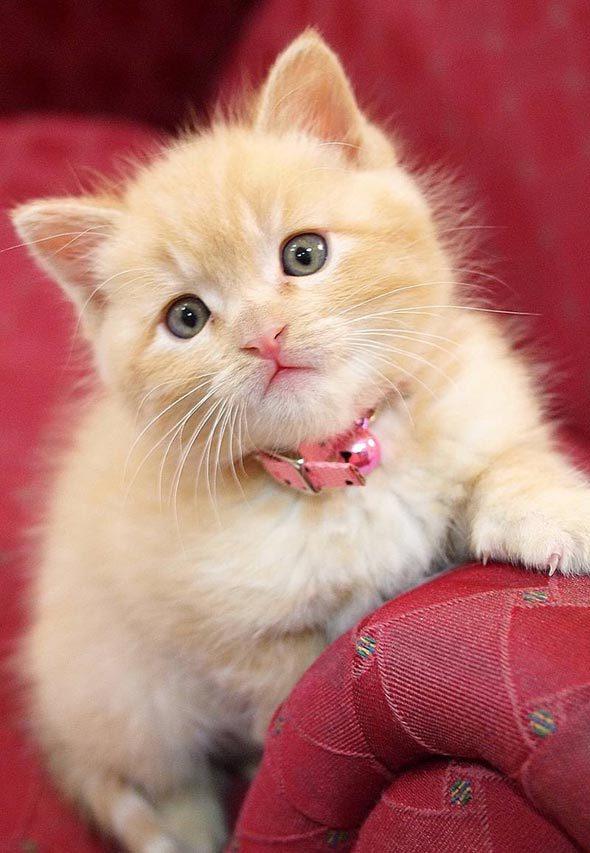 Good Morning Cute Cat And Kitten
