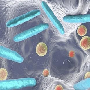البكتيريا المعوية تزيد خطرَ الإصابة بسرطان القولون