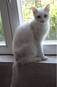 white cat sat on windowsill