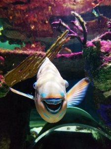 smiling fish underwater