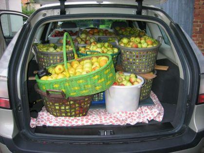 Saab und Apfelernte. Foto von Manfred