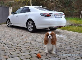Kein Kombi, kein Auto für Polly. Schade.