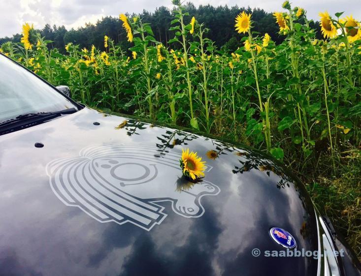 Paul und die Sonnenblumen