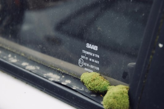 Nature takes possession of this Saab