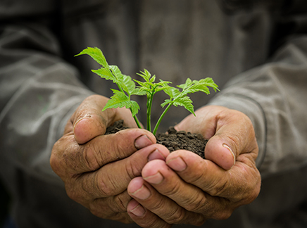 Cultivation: a first step in the fundraising process