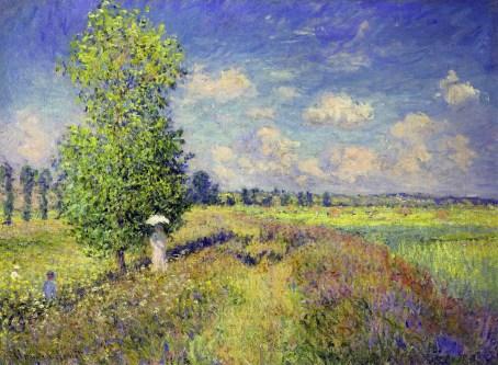 the summer poppy field