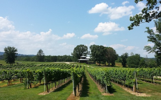 Nottely River Valley Vineyards - Murphy, NC