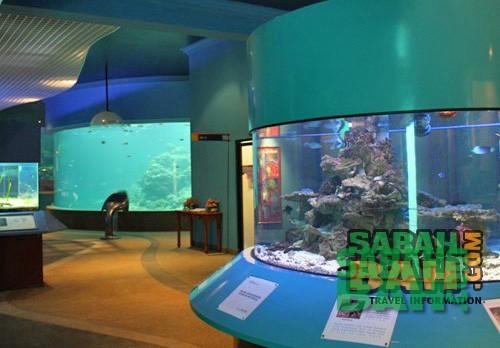 Marine Aquarium & Museum at University Malaysia Sabah, Kota Kinabalu