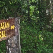 Book the Salt Trails Jungle Trekking Experience
