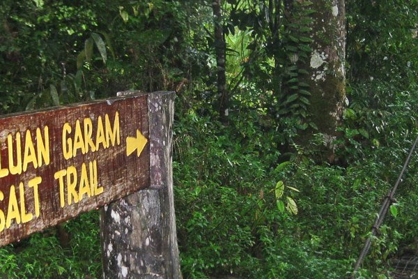 Book the Salt Trails Jungle Trekking Experience