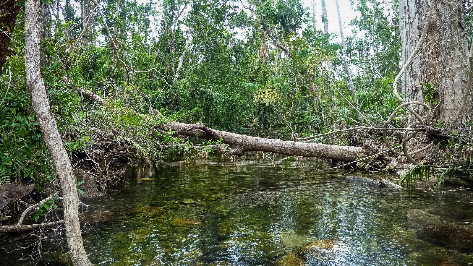a photo of a river on hinchinbrook island.
