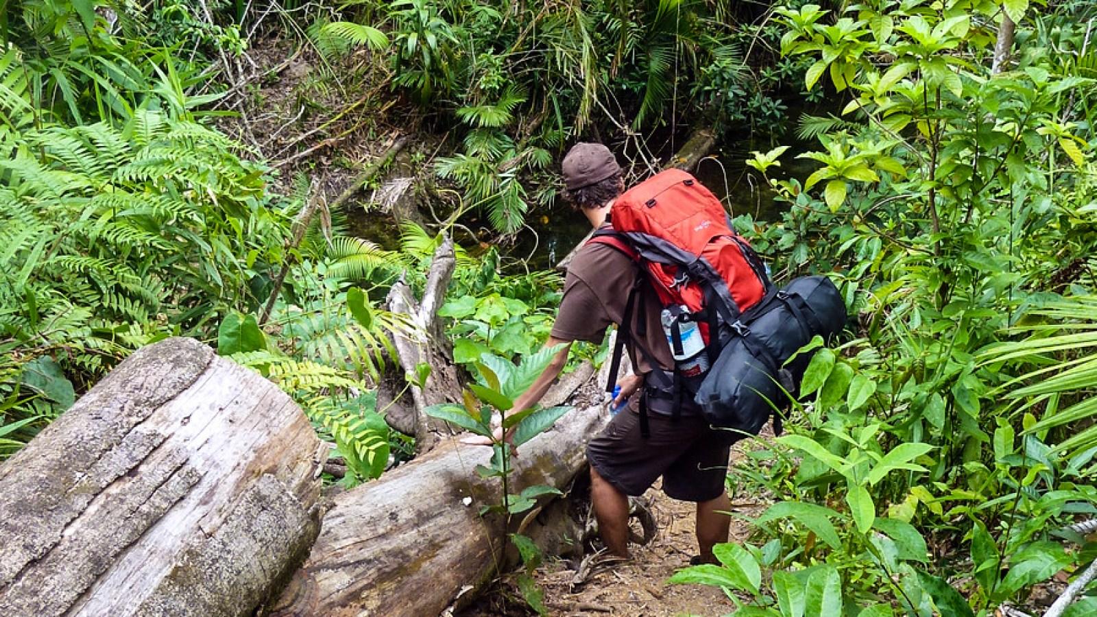 a photo of a hiker descending a steep slope on hinchinbrook island.
