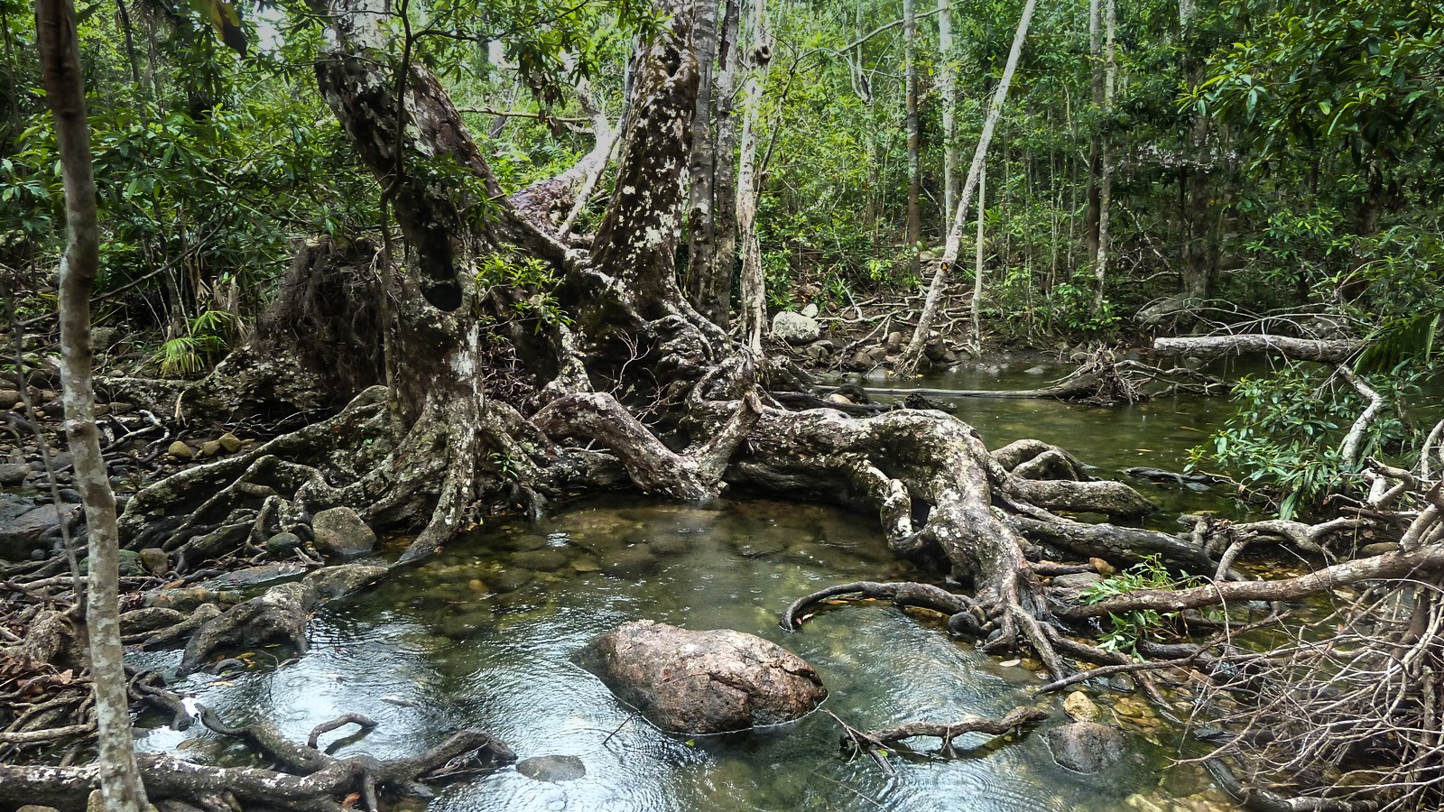 a photo of a tree in a river on hinchinbrook island.