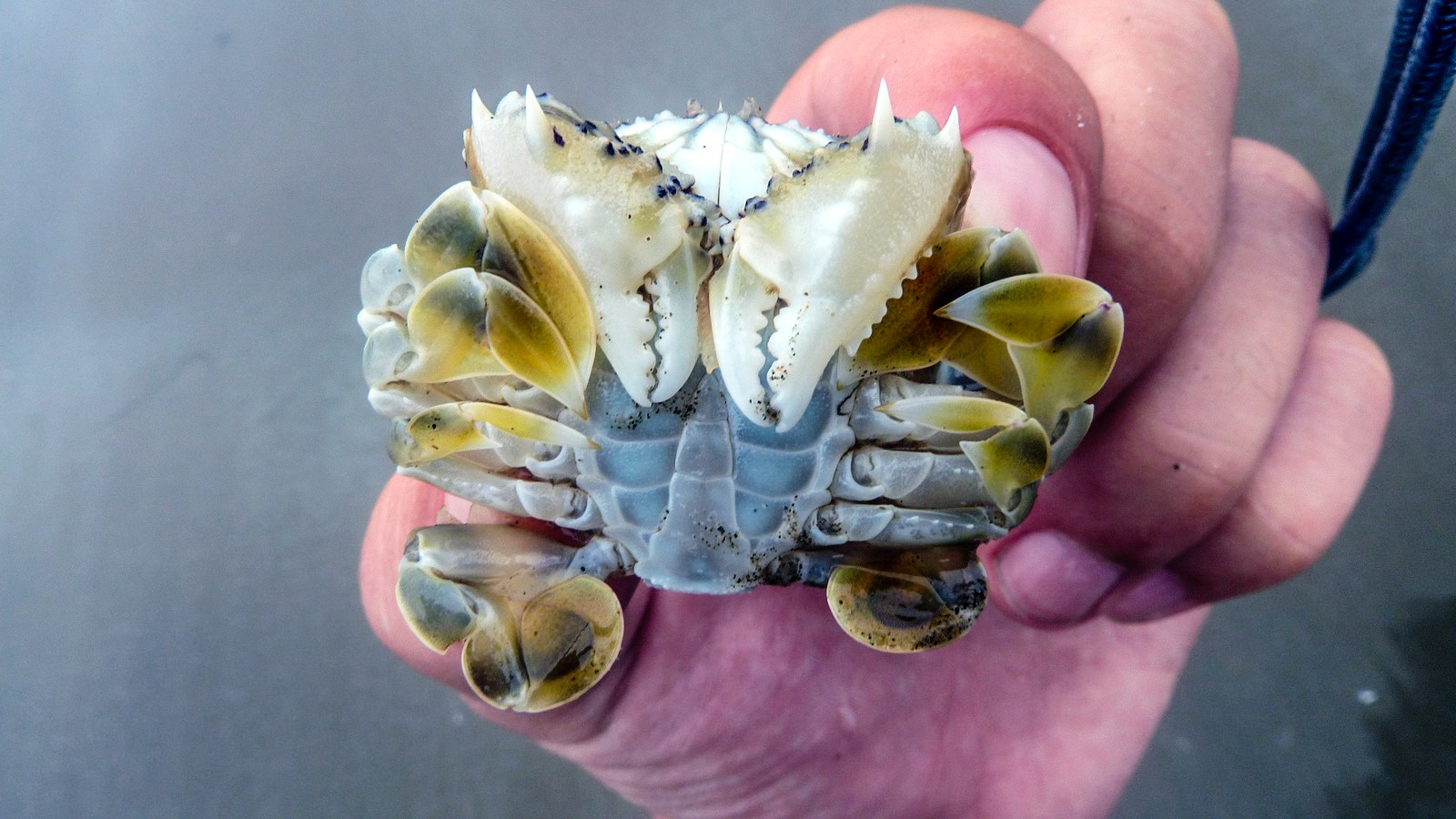 a photo of crab.