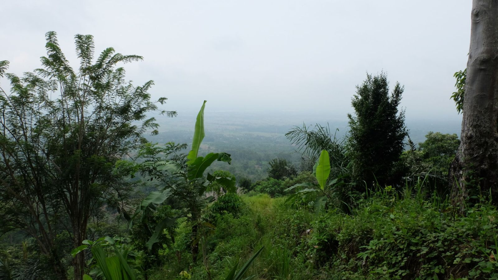 a photo of the valley on the west side of gunung leuser national park.