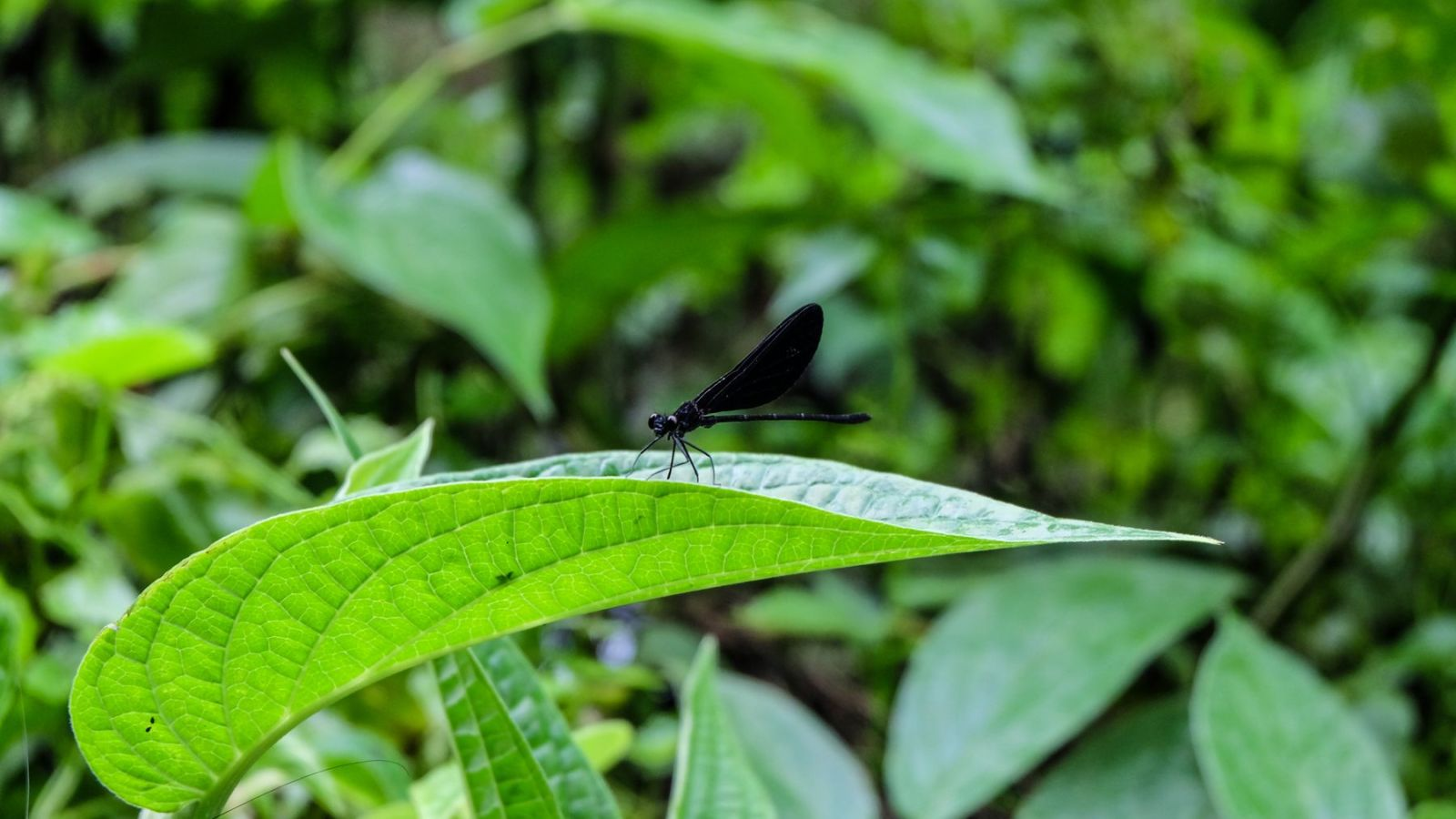 a photo of a dragonfly in gunung leuser national park.