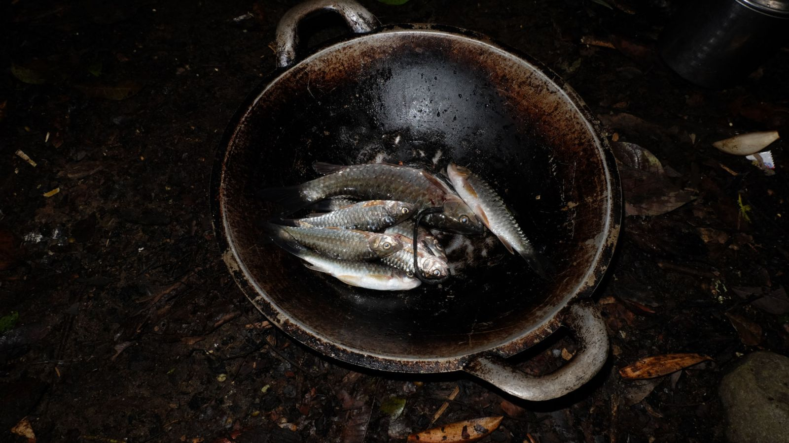 a photo of a frying pan with fish.