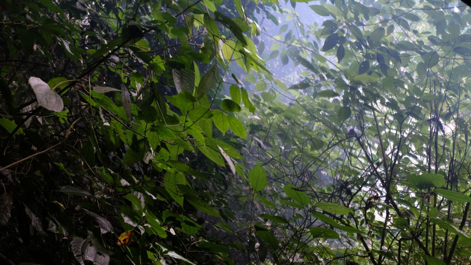 a photo of the rainforest with smoke in in gunung leuser national park.