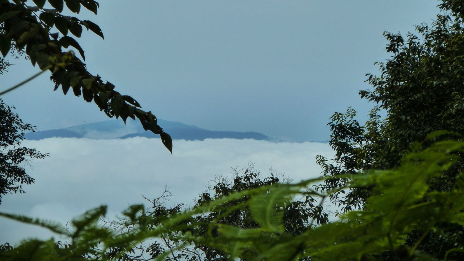 a photo from above the clouds in gunung leuser national park.