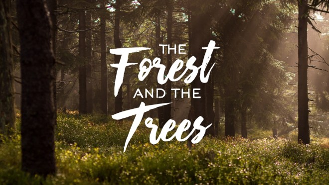 theforestandthetrees