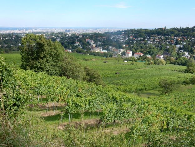 View of Vienna from the vineyards