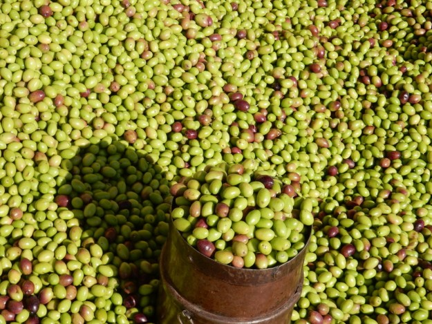 Olives are also harvested in the fall. Photo from the Kas market.