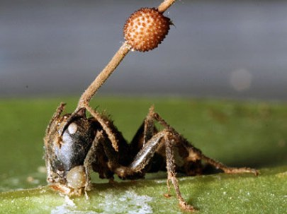 zombie-ants-midstory1