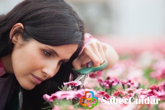 mujer cuidando y cultivando una azalea