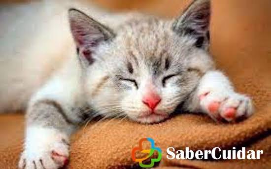 Gato bebé ojos cerrados