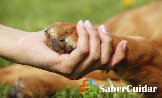 Masaje en las patas de tu perro