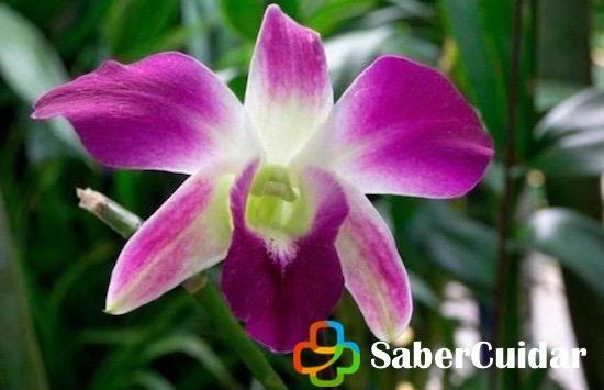Orquídeas moradas sembradas en el jardín