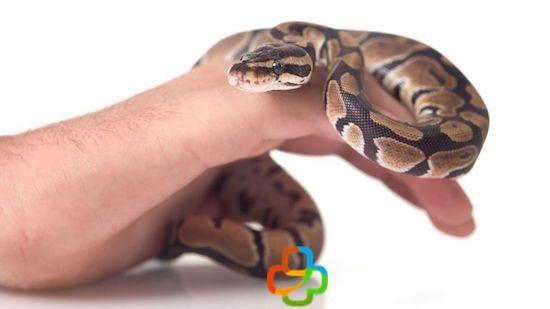 Serpiente en la mano de un hombre