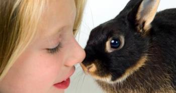 cuidar a un conejo