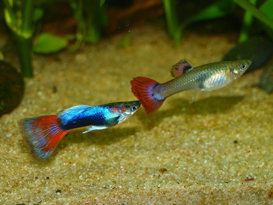 consejos cuidar un acuario