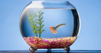 como cuidar un pez