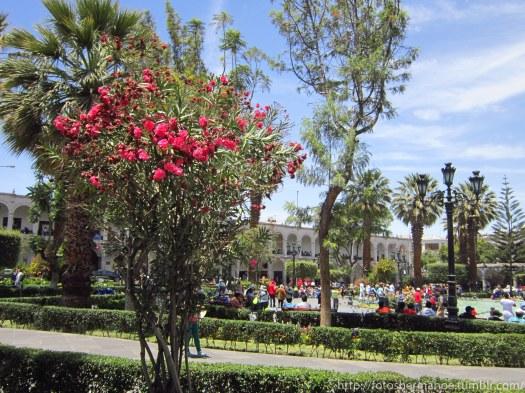 Arequipa (1 de 25)
