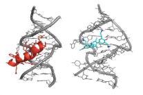 La molécula de terfenilo (en azul) se une al mismo receptor que la proteína Rev (en rojo)./ ISCIII