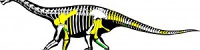 arago en 2014 con los nuevos huesos en verde