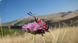 Interacción entre una planta y un insecto polinizador./ Roger Vilà