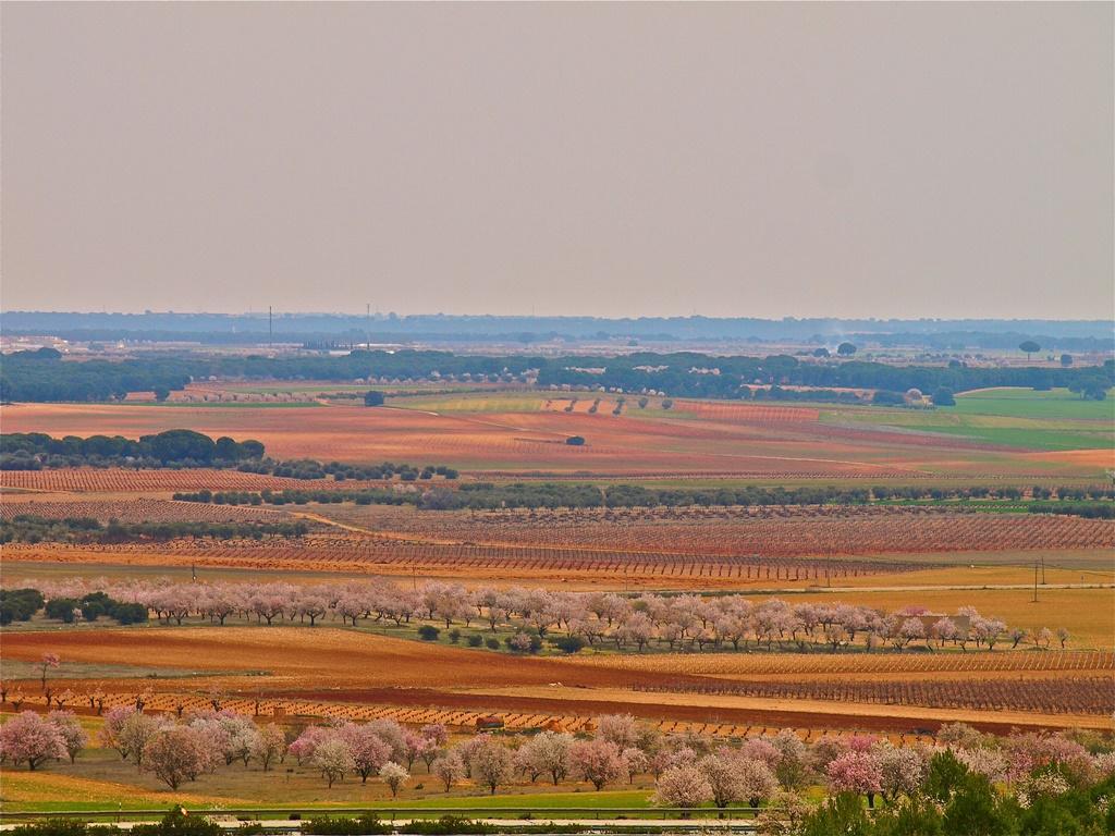 Marea rosa en La Mancha. Autora, Gloria Castro