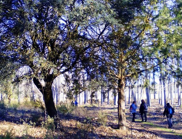 ruta-senderismo-naturaleza-villahermosa-lagunas-ruidera-campo-de-montiel-la1