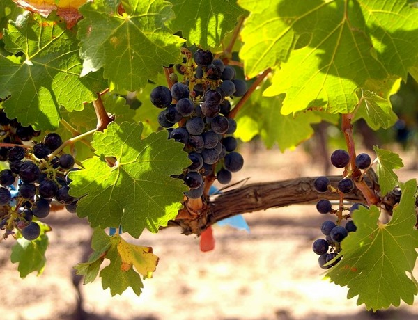 Vino, feria de los sabores, Alcázar de San Juan