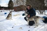 Traineau à chiens-8